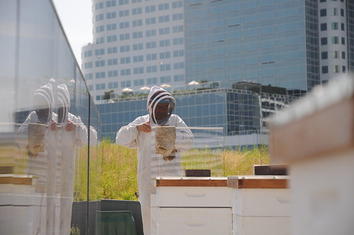 Rooftop Beehives, Vancouver Convention Centre by vancouverconvention.