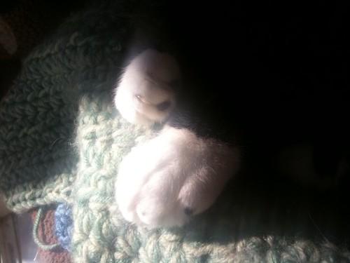 Sunshine toes
