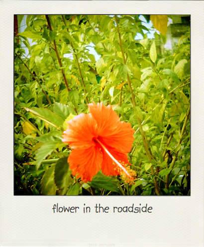 flower.pola