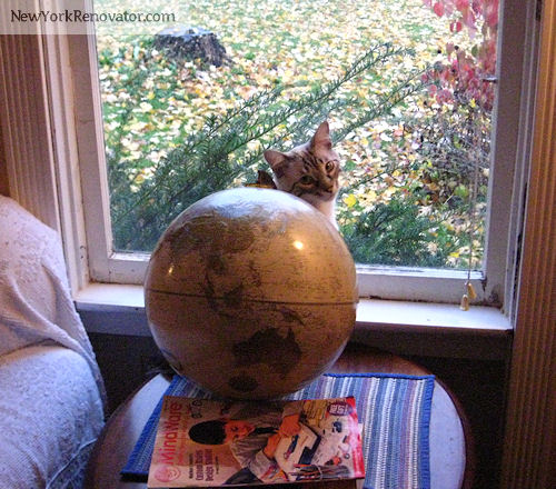 Cat on World
