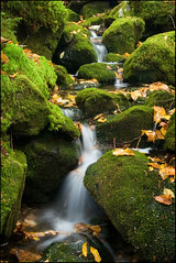 mossyrocks (Ben Kimball) Tags: autumn green fall nature wet water leaves moss rocks stream soft hiking newhampshire whitemountains falls lush cascade appalachiantrail deepforest mountainstream rattleriver photocontesttnc10 primevalforestgroups pfmoss pfwaterfall rattlerivertrail pfvelvet