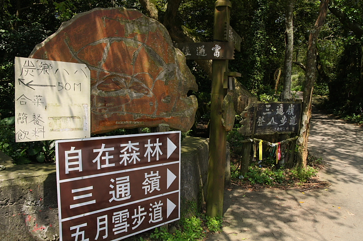 苗栗五月雪桐花步道002