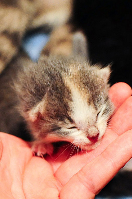 cute rescue kitten palm sized