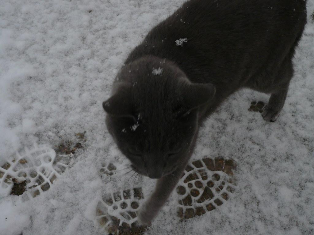 neige11
