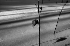 landscape (nosha) Tags: winter bw nikon vermont january newyear f10 newyears 24mm pm 2009 vt lightroom nosha nikond300 january2009 newyears2009