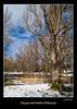 Sotillo2 (Harrycruz2) Tags: españa tree landscape arbol reflex nieve paisaje olympus zuiko usuarios palencia castillayleón sotillo e500 uro