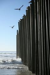 Seagulls Land (nathangibbs) Tags: ocean seagulls birds fence mar border tijuana frontera playas cerco canoneos30d tamron1750mmf28 addtofeed