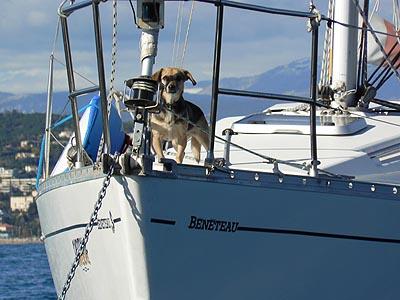 chien spectateur 2.jpg