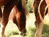 "Horses at Rockledge Ranch in Colorado Springs • <a style=""font-size:0.8em;"" href=""http://www.flickr.com/photos/99459774@N00/3264958254/"" target=""_blank"">View on Flickr</a>"