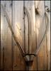 Forke (sulamith.sallmann) Tags: wood wooden object landwirtschaft holz tool werkzeug objekt hölzern forke fu0