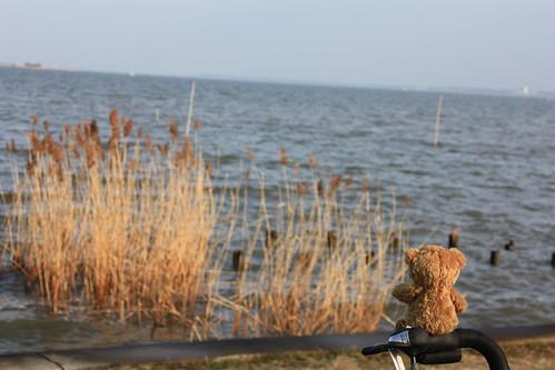 teddy bear by a river