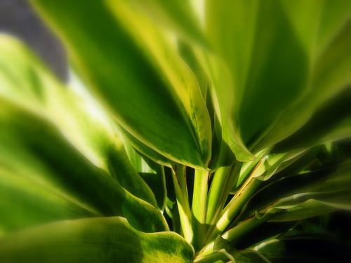 Green Ti
