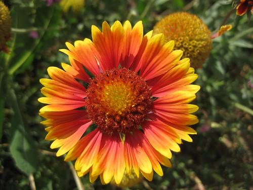 Mom's flowers 030