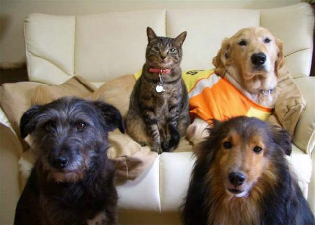 cats&dogs_27