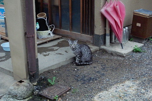 Today's Cat@20090802