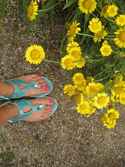 (seaotter22) Tags: pink flowers chicago flower feet yellow toes sandals
