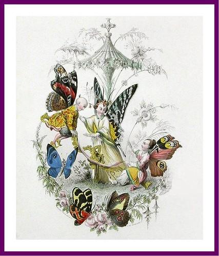 003--Les Papillons, métamorphoses terrestres des peuples de l'air- Pierre Amédée Varin