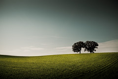 Summer Hillside (Loren Zemlicka) Tags: blue sky tree green field june wisconsin rural landscape photography photo midwest image farm horizon country hill picture land hillside 2009 canonef1740mmf4lusm canoneos5d superaplus aplusphoto lorenzemlicka