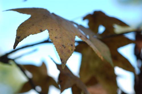 fall foliage by you.