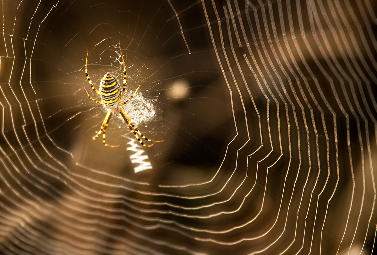 Web master | Веб мастер