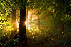Bleeding Obvious? (jasontheaker) Tags: trees mist beach forest sunrise dawn yorkshire memories son 2009 otley elden dainfield jasontheaker
