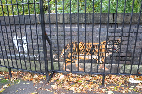 graffiti of tiger; photo taken so that the tiger looks like it's behind iron bars