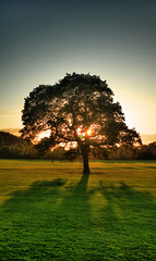 Fall Season Silhouette (Luke Andrew Scowen 2009) Tags: autumn sun tree fall silhouette season october a200 2009 hdr sonya200 october2009 autumn2009 lukeas09 lukescowen lukeascowen lukeascowen2009
