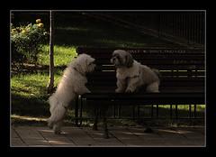 """""""Ven a la cama cariño"""" (Luko*) Tags: la perros cama ven cariño"""