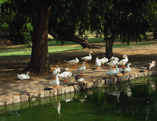 PARK, NEW DELHI by Kalta Harsh
