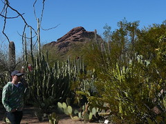 Joshua and Papago (alist) Tags: phoenix garden botanical desert alicerobison