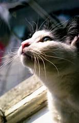 That pigeon sure looks tasty! (Tania Sonnenfeld) Tags: favorite cute animal cat kat anton