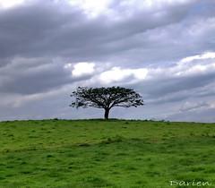 Lone tree (enhanced) (Dani Irwan) Tags: blackandwhite tree field nikon 1855mm bnw lonetree d40 awesometree nikond40