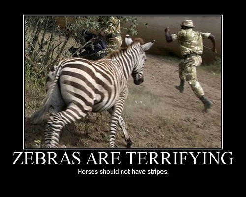 zebras-are-terrifying