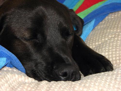 Sleepyhead #1