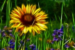 EE625068913 (alan57) Tags: flowers photoshop landscapes digitalart billings specnature theunforgettablepictures alan57 fractalius adoreadmireappreciate naturescreations struckbyrainbow