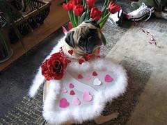 norman posing in valentines wings