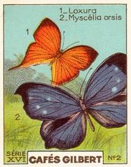gilbertpapillons006