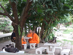 Young Monks and Temple Dogs (Earthworm) Tags: thailand island bangkok kohkret