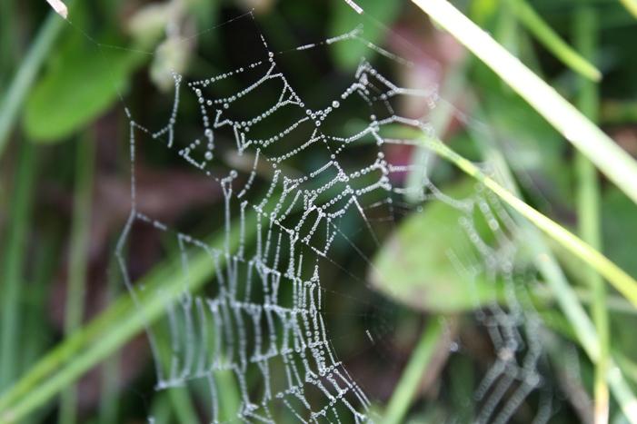 08-10-spiderweb