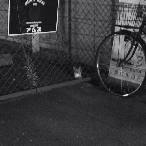 Today's Cat@20090812
