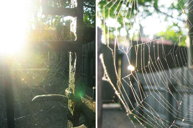 mer spindelnät