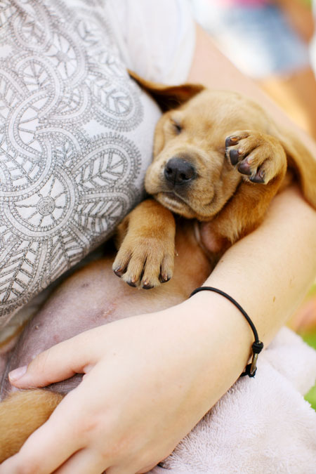 f_puppies_116.jpg