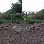 Waterfowl (parallel 3D) thumbnail
