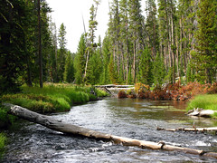 Firehole River on the trail to Lone Star Geyser