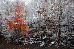 fall mixed with winter (Anitab) Tags: trees orange snow fall westvirginia