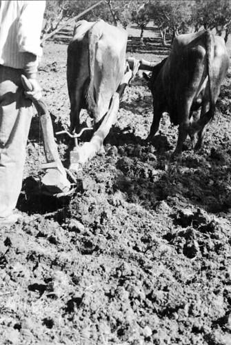 Trabalhos agrícolas, Europa (H. Novais, s.d.)