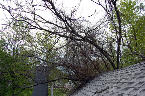 Tree on the roof