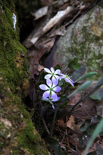 mossy flower