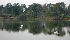 Flying birds... (rabidash*) Tags: india beautiful birds fantastic creation dash excellent lovely rabi rabindra rabidash rkdash