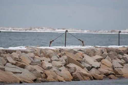 Spot the Gull